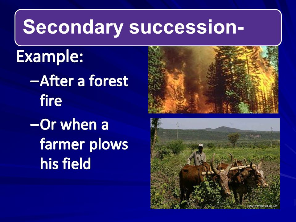 Secondary succession-
