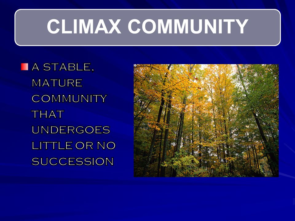 CLIMAX COMMUNITY a stable, mature community that undergoes little or no succession