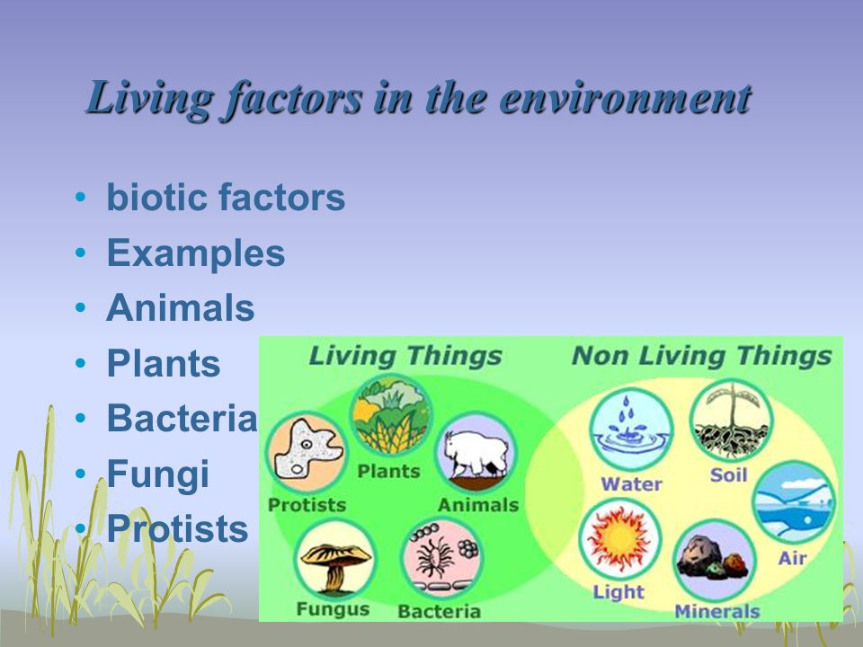 Living factors in the environment