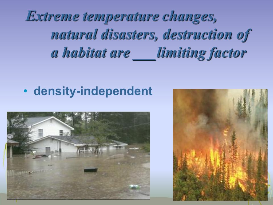 Extreme temperature changes, natural disasters, destruction of a habitat are ___limiting factor