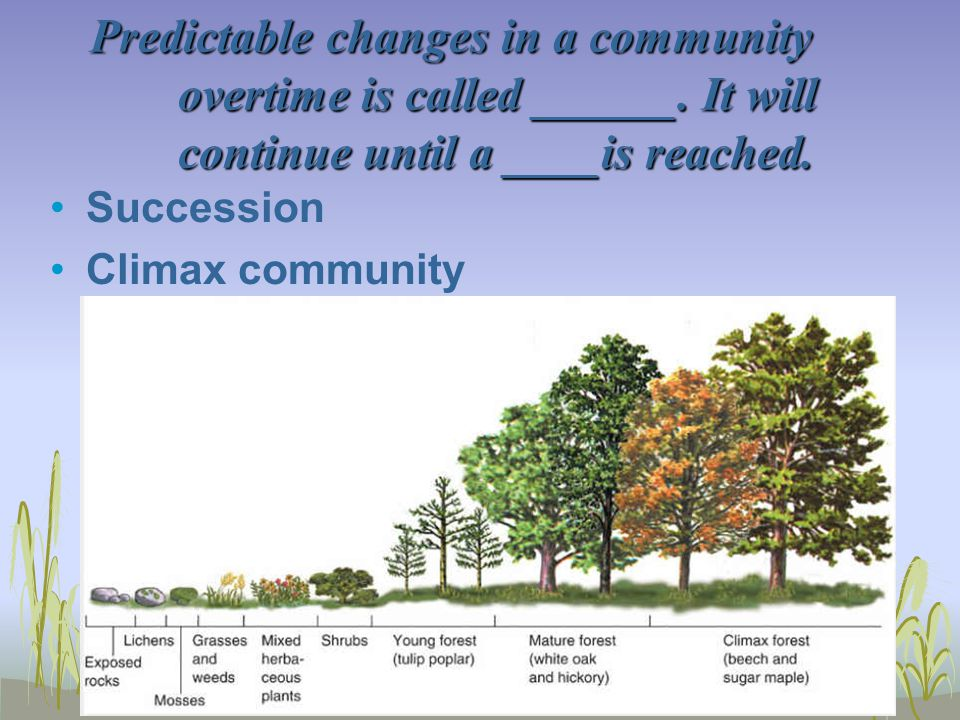 Predictable changes in a community overtime is called ______