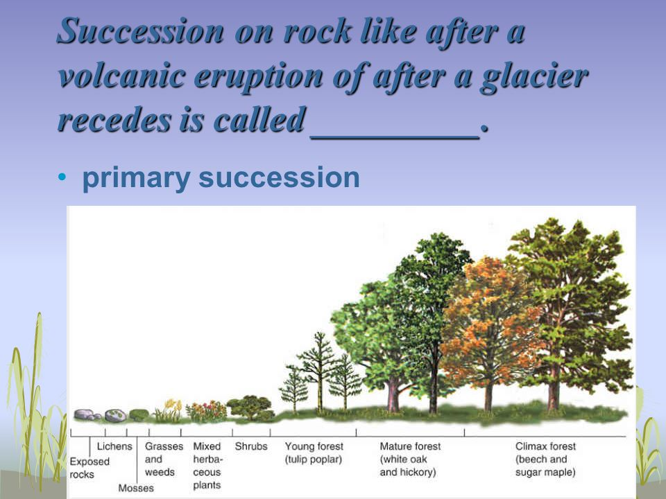 Succession on rock like after a volcanic eruption of after a glacier recedes is called _________.
