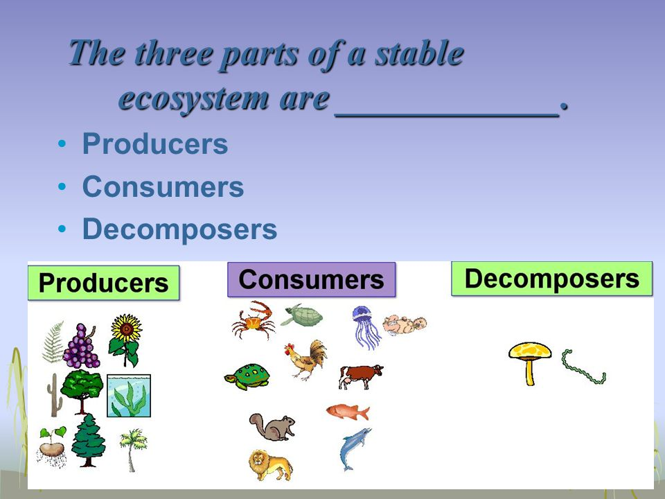 The three parts of a stable ecosystem are ____________.