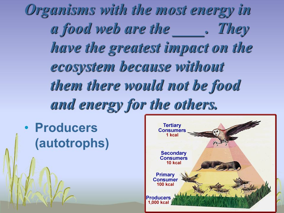 Organisms with the most energy in a food web are the ____