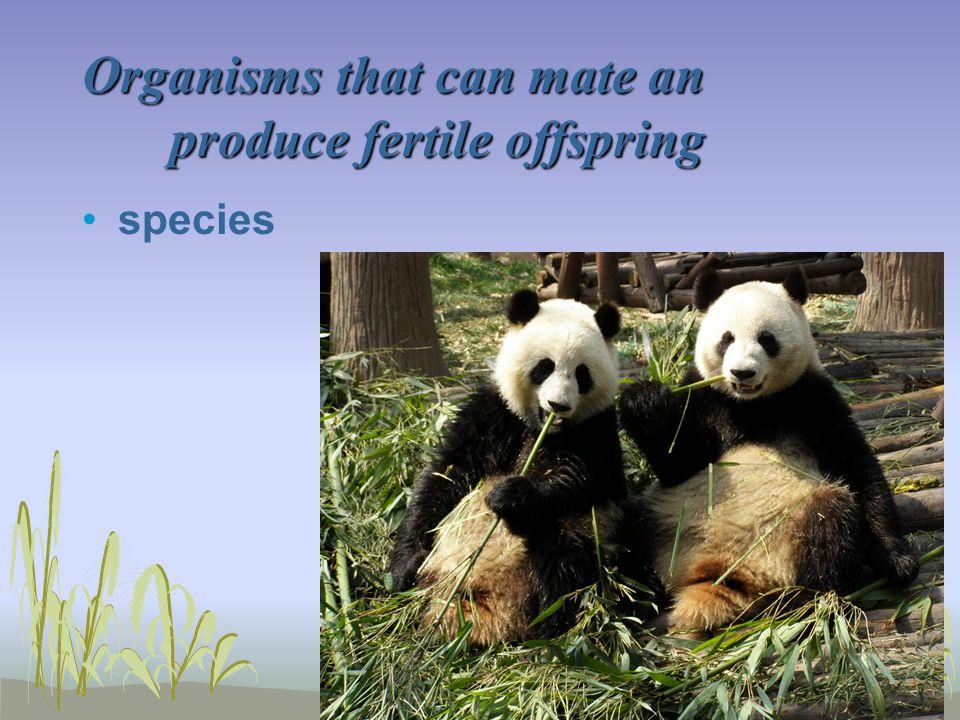 Organisms that can mate an produce fertile offspring