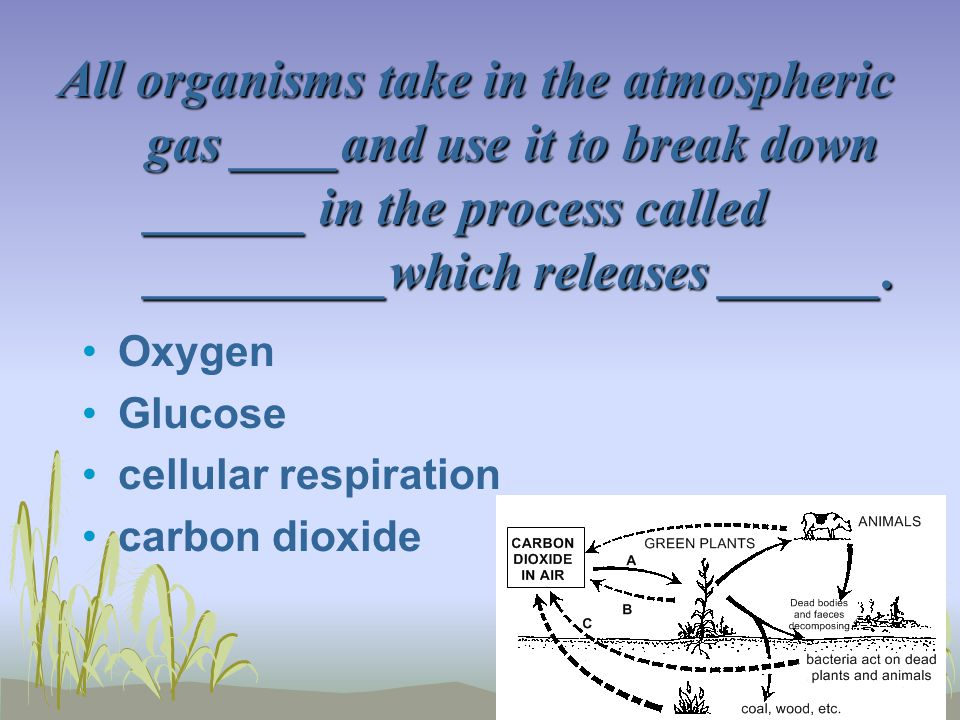 All organisms take in the atmospheric gas ____and use it to break down ______ in the process called _________which releases ______.