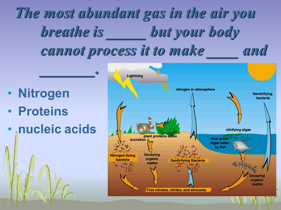 The most abundant gas in the air you breathe is _____ but your body cannot process it to make ____ and _______.