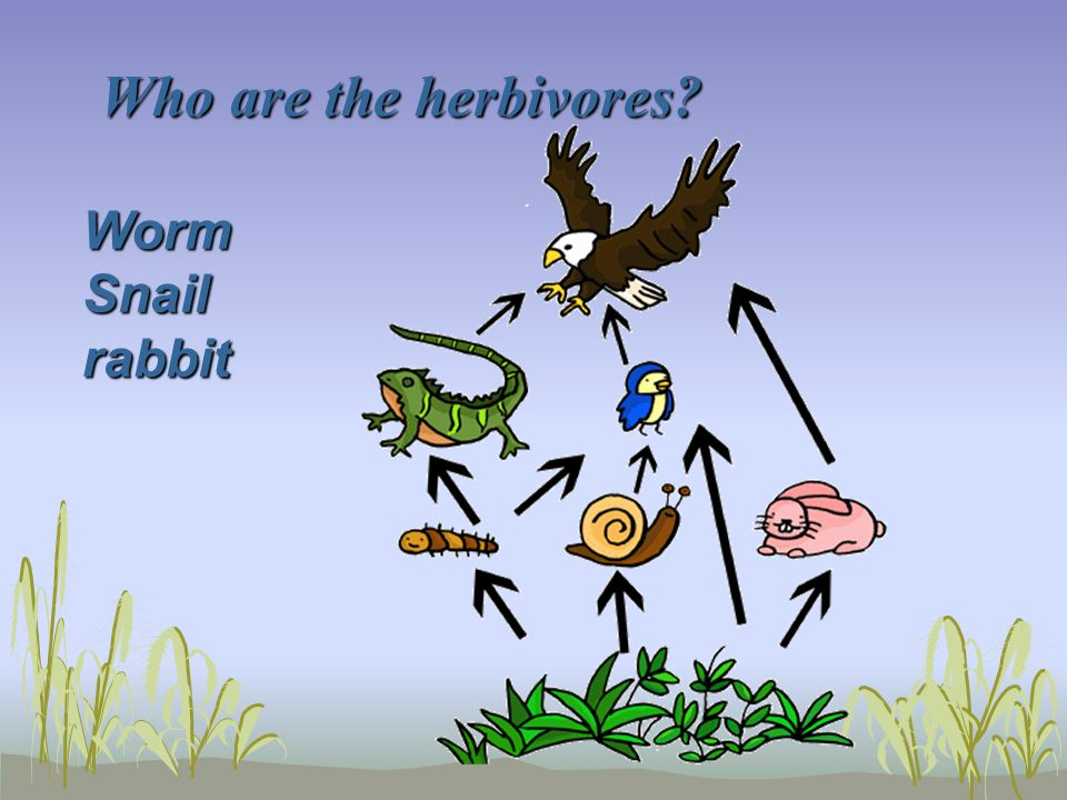 Who are the herbivores Worm Snail rabbit