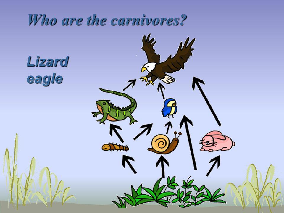 Who are the carnivores Lizard eagle