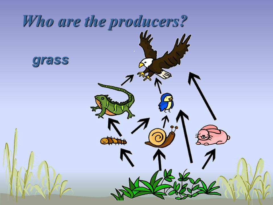Who are the producers grass