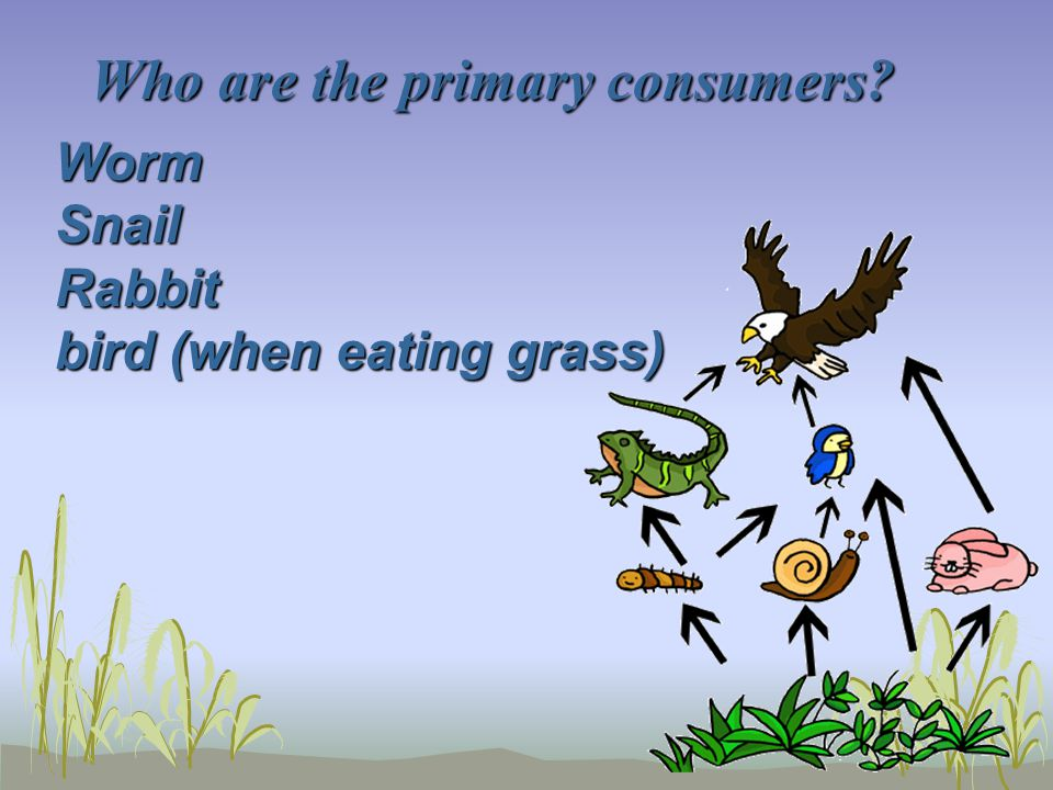 Who are the primary consumers