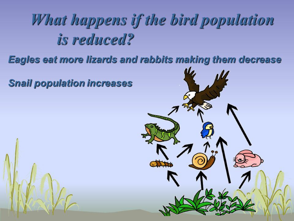 What happens if the bird population is reduced