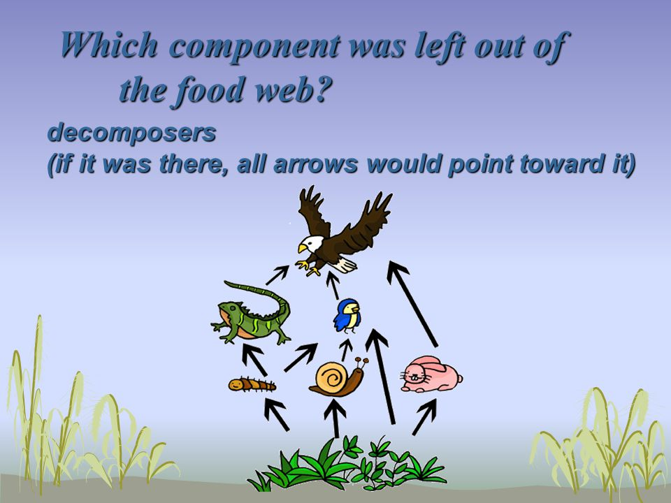 Which component was left out of the food web