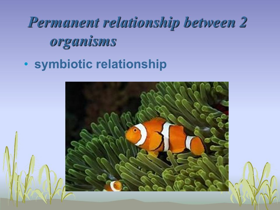 Permanent relationship between 2 organisms