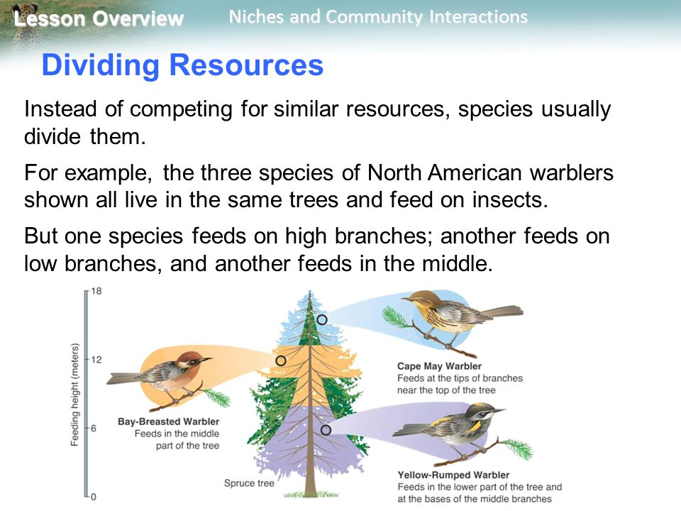 Dividing Resources Instead of competing for similar resources, species usually divide them.
