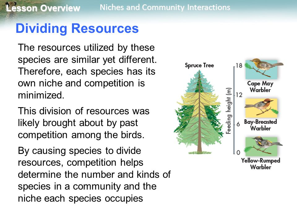 Dividing Resources