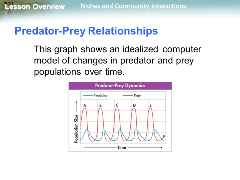 graph showing predator prey relationship in the tundra