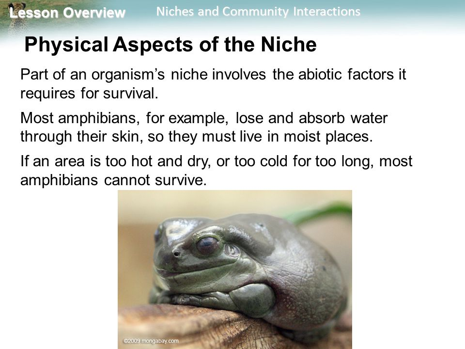 Physical Aspects of the Niche