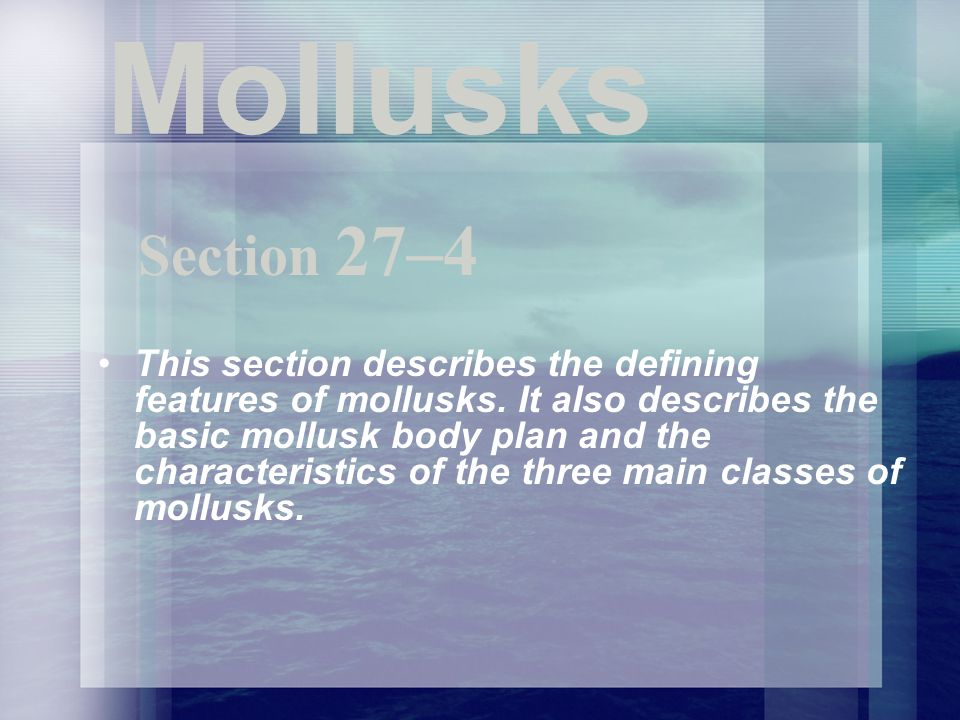Mollusks Section 27–4.