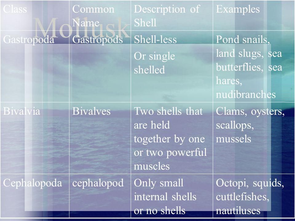 Mollusk Class Common Name Description of Shell Examples Gastropoda