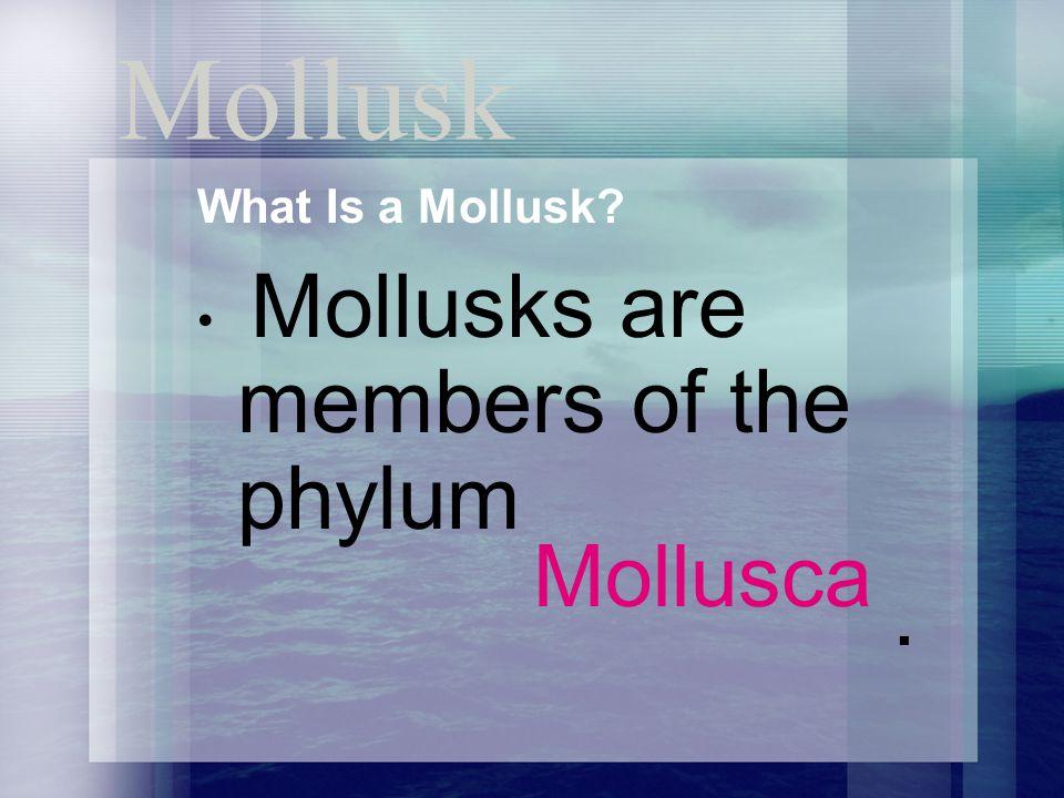 Mollusca . Mollusk What Is a Mollusk