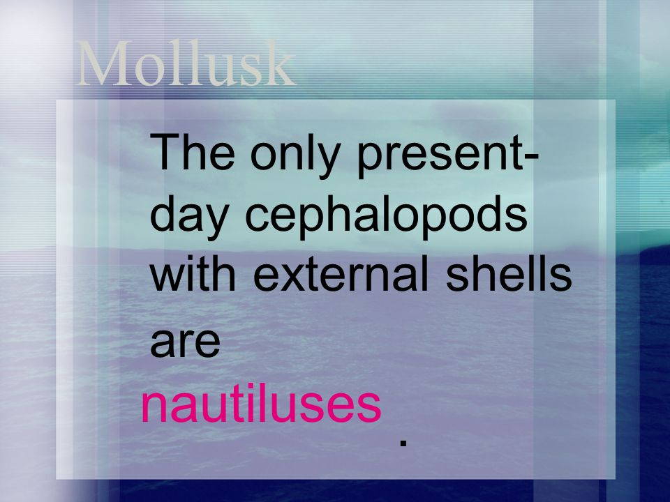Mollusk The only present- day cephalopods with external shells are