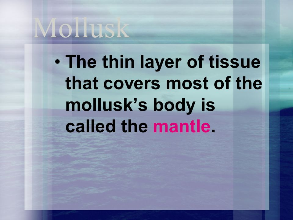 Mollusk The thin layer of tissue that covers most of the mollusk's body is called the mantle.