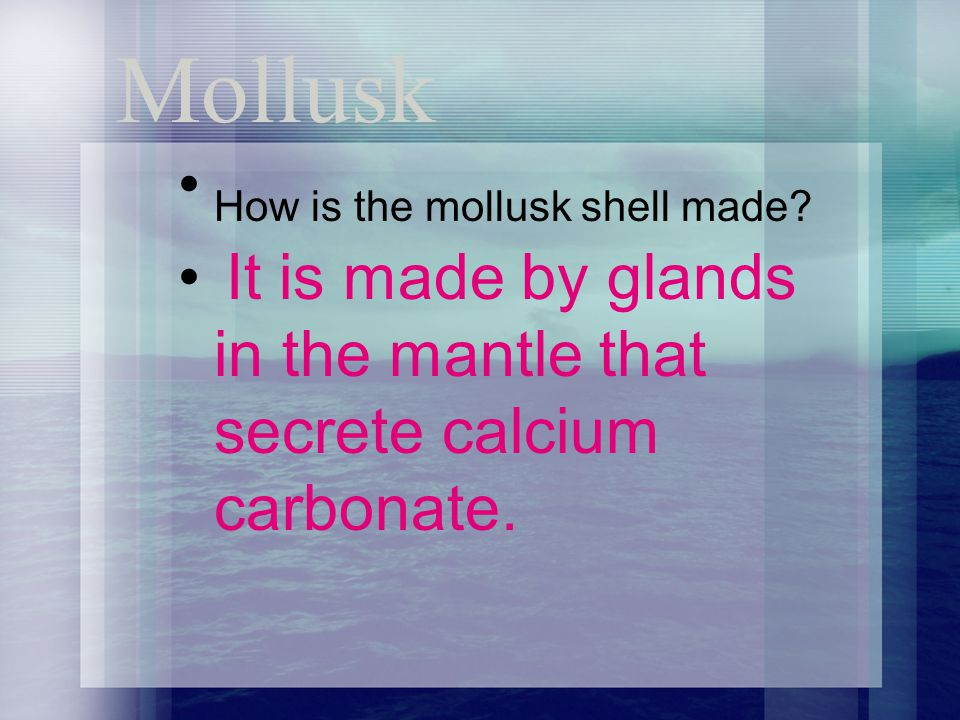 How is the mollusk shell made