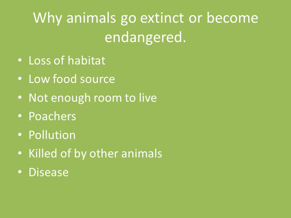 Why animals go extinct or become endangered.