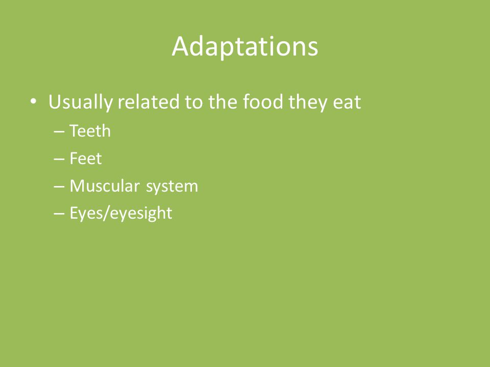 Adaptations Usually related to the food they eat Teeth Feet