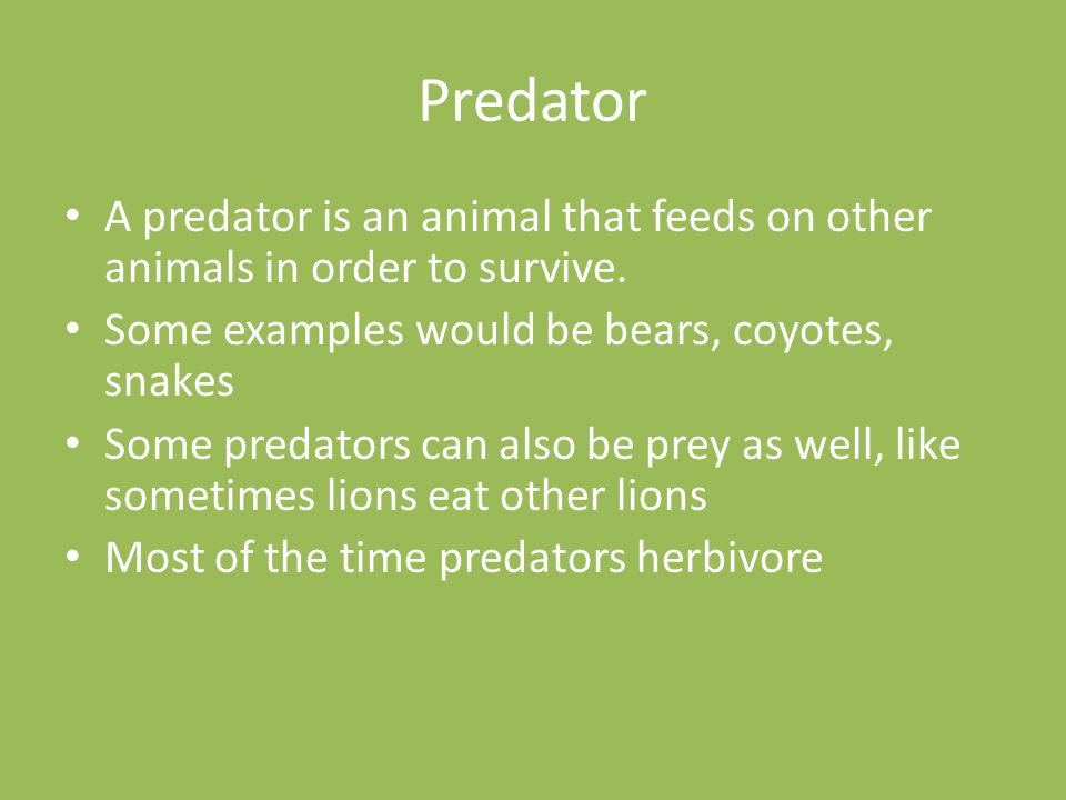 Predator A predator is an animal that feeds on other animals in order to survive. Some examples would be bears, coyotes, snakes.