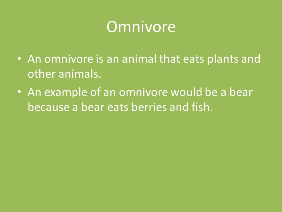 Omnivore An omnivore is an animal that eats plants and other animals.