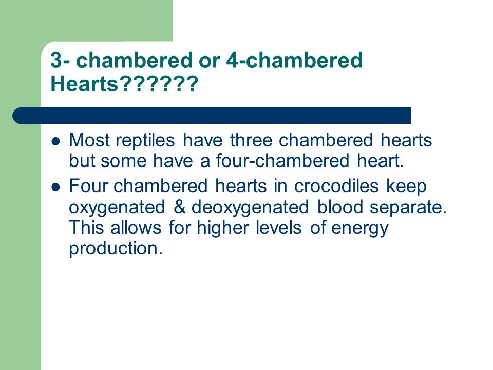 3- chambered or 4-chambered Hearts