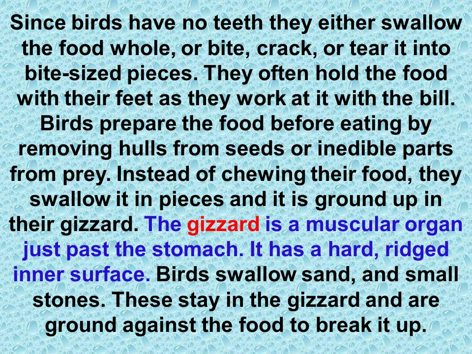 Since birds have no teeth they either swallow the food whole, or bite, crack, or tear it into bite-sized pieces.