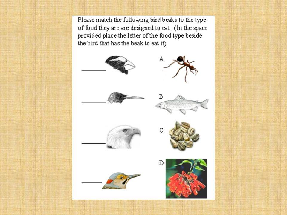 Beaks to Eats Activity