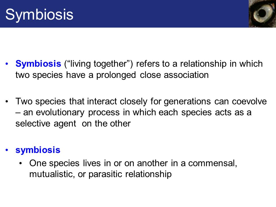 Symbiosis Symbiosis ( living together ) refers to a relationship in which two species have a prolonged close association.