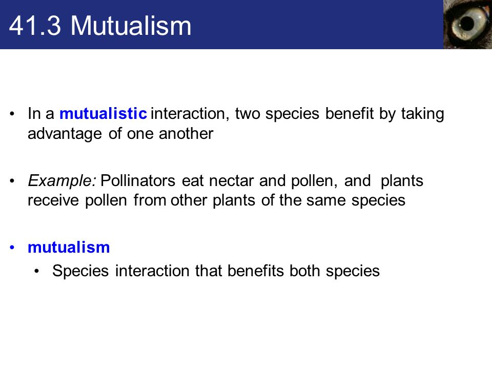 41.3 Mutualism In a mutualistic interaction, two species benefit by taking advantage of one another.