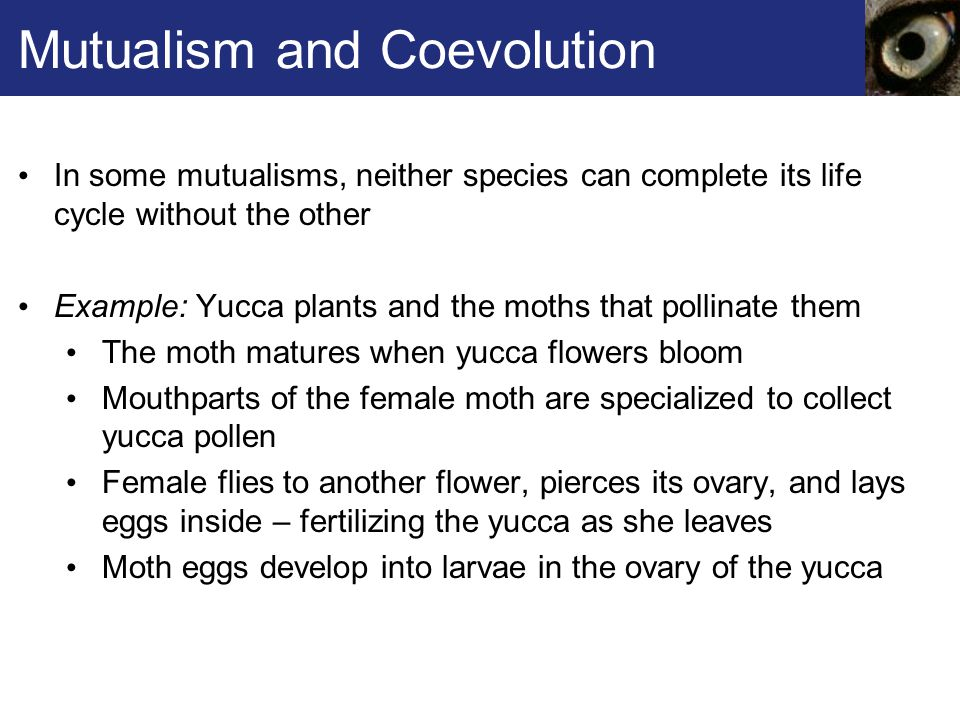 Mutualism and Coevolution