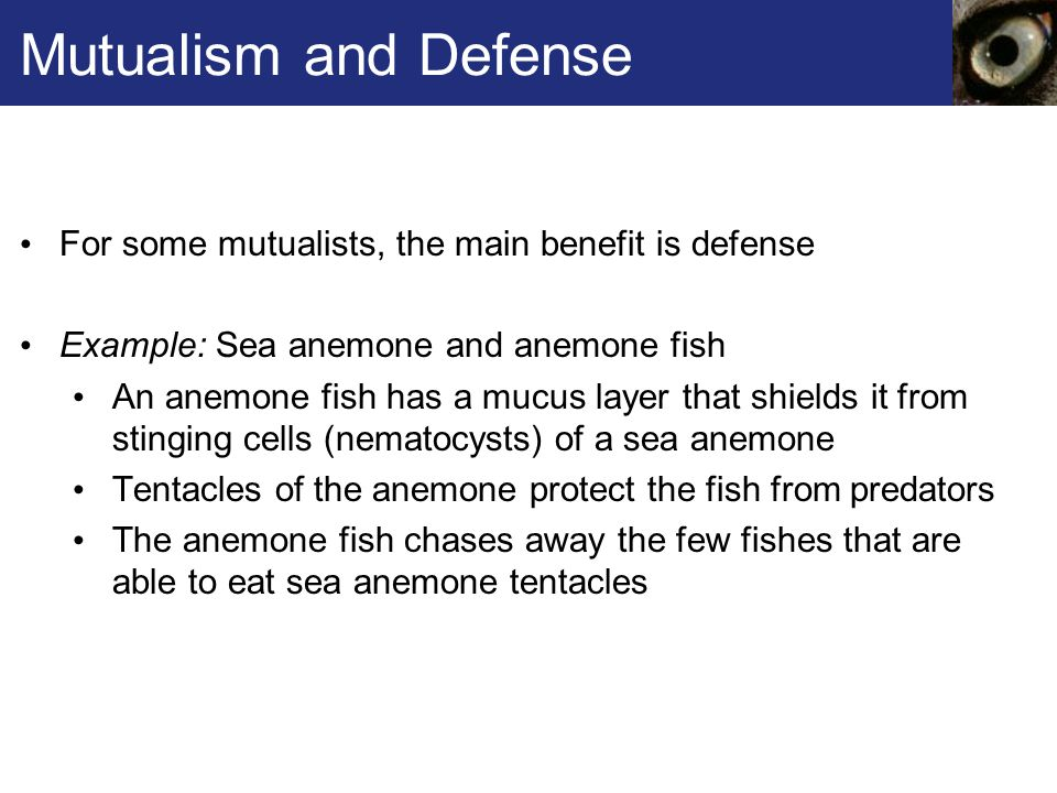 Mutualism and Defense For some mutualists, the main benefit is defense
