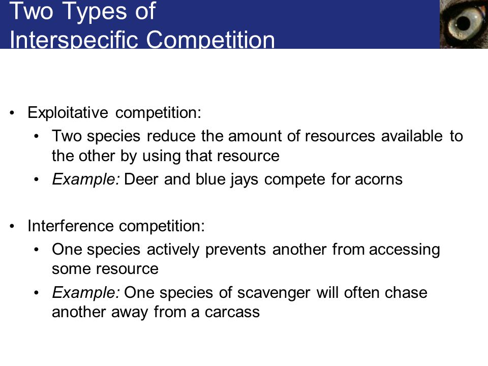Two Types of Interspecific Competition