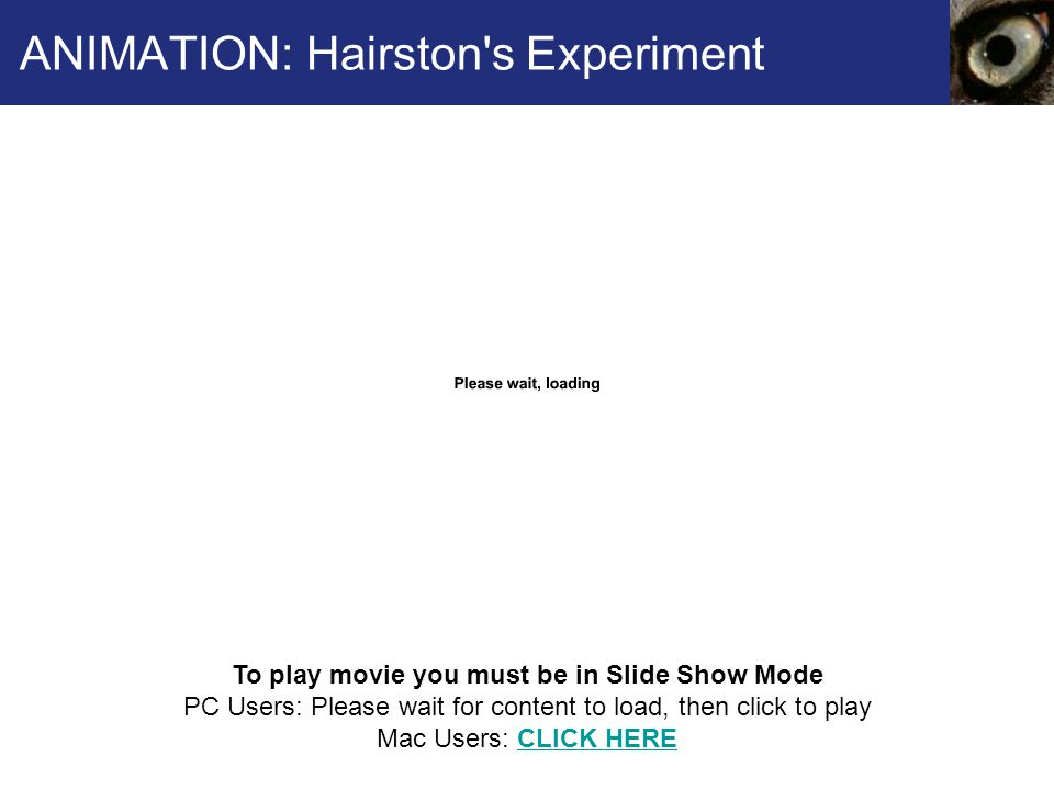 ANIMATION: Hairston s Experiment
