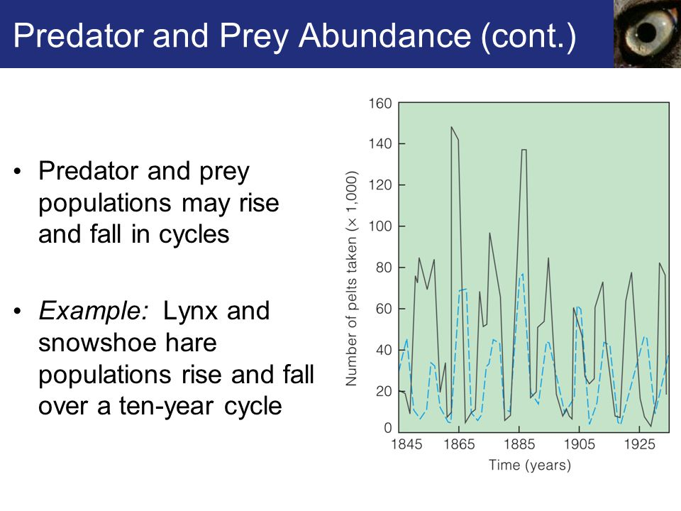 Predator and Prey Abundance (cont.)