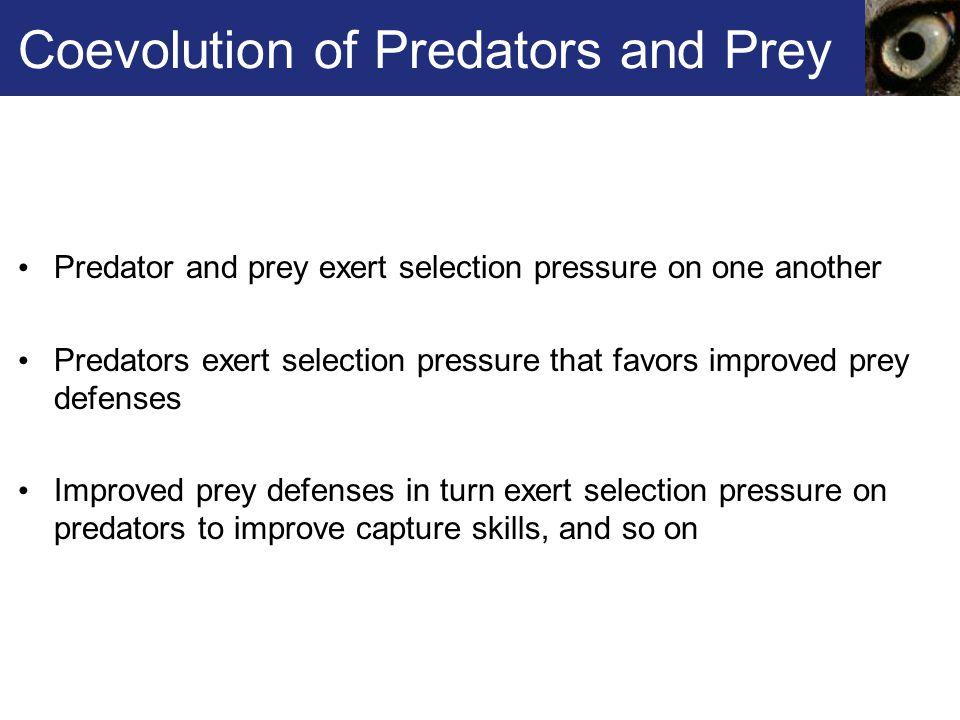 Coevolution of Predators and Prey