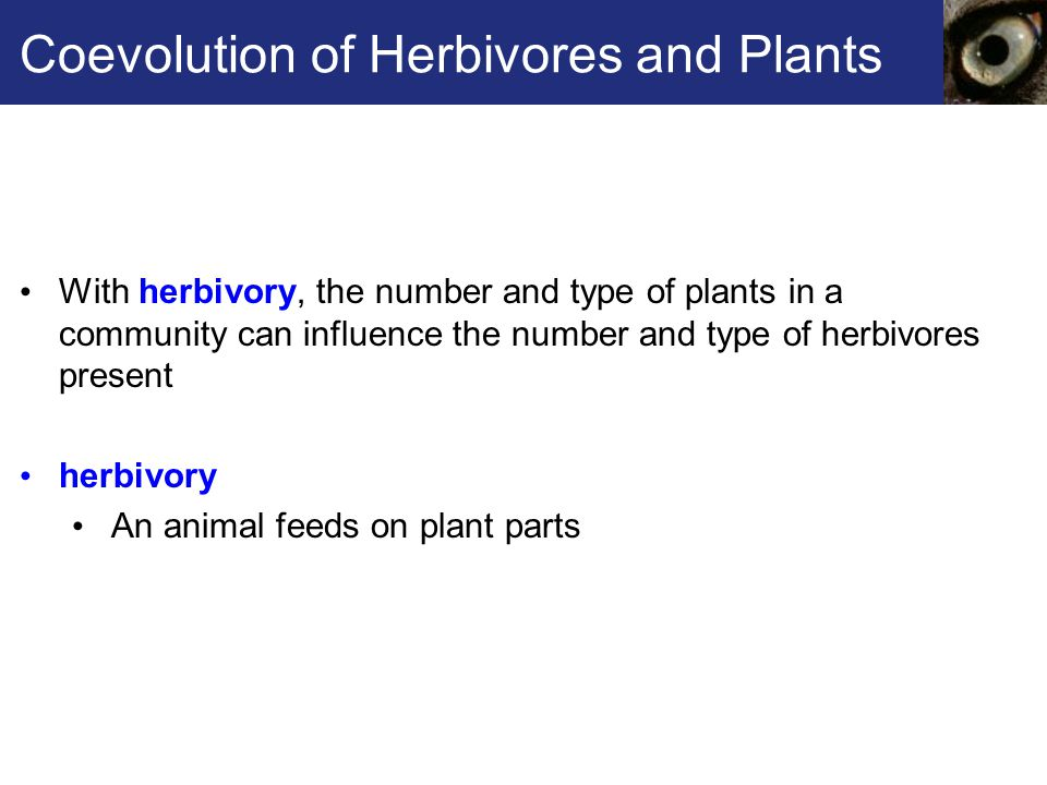 Coevolution of Herbivores and Plants