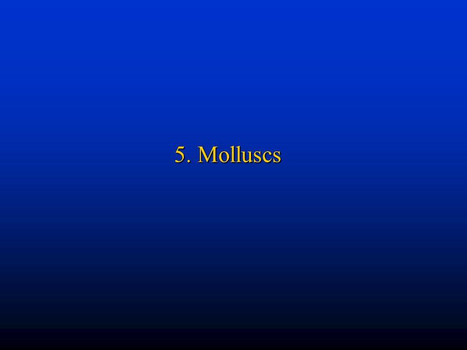 5. Molluscs