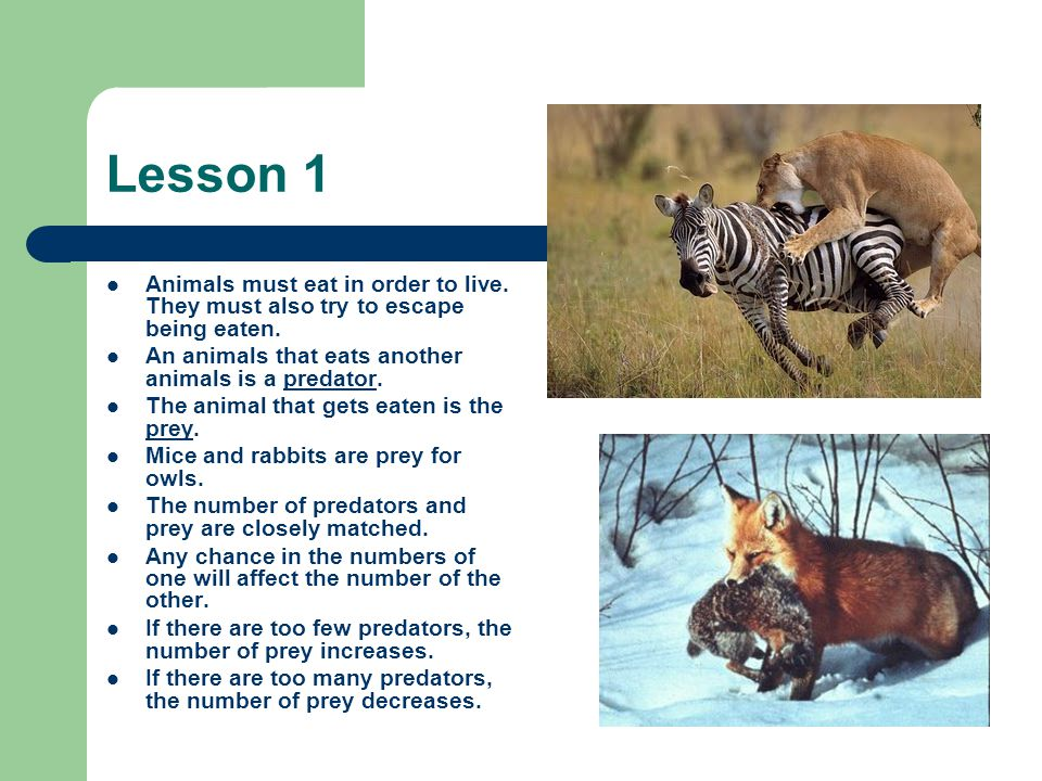 Lesson 1 Animals must eat in order to live. They must also try to escape being eaten. An animals that eats another animals is a predator.