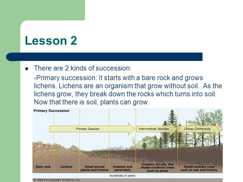 Lesson 2 There are 2 kinds of succession: