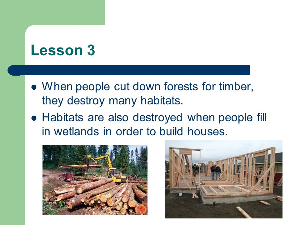 Lesson 3 When people cut down forests for timber, they destroy many habitats.