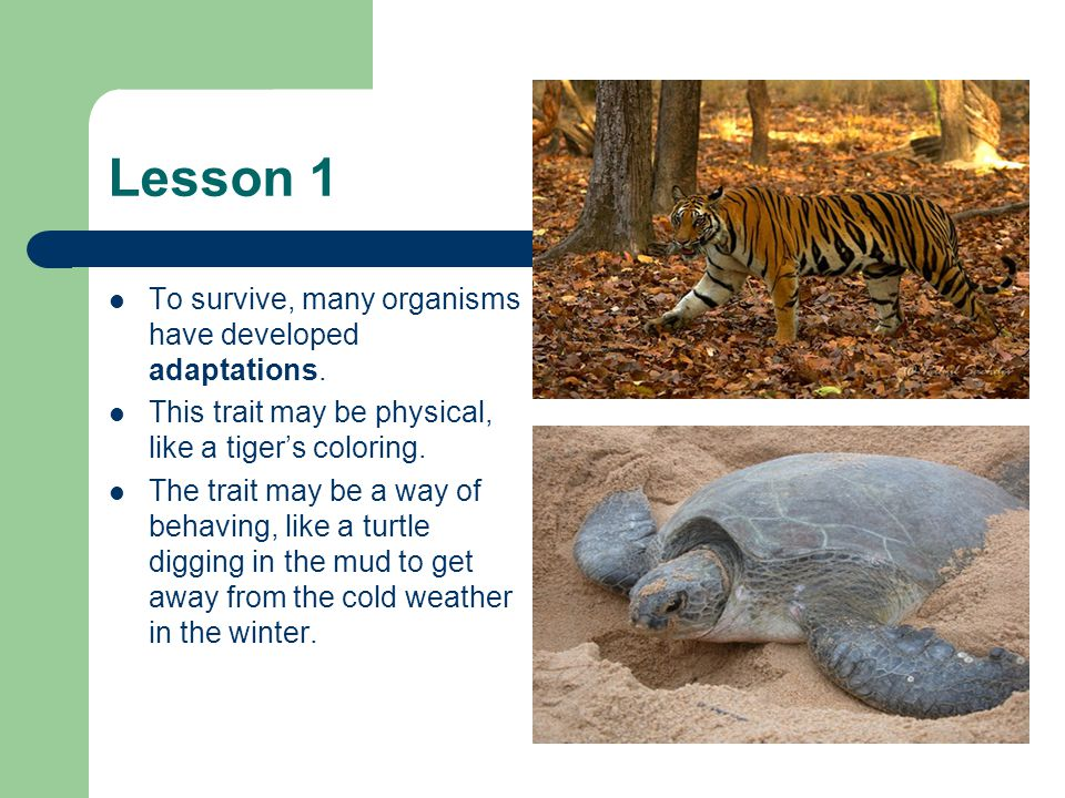 Lesson 1 To survive, many organisms have developed adaptations.