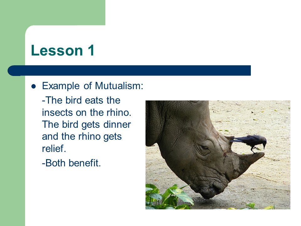 Lesson 1 Example of Mutualism: